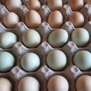 Farm Fresh Bantam Eggs 2 .jpg