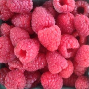 pomeroyraspberries.jpg