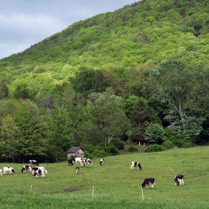 on pasture.jpg