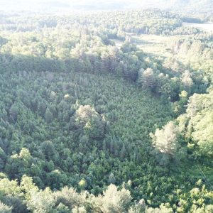 pieropan you+cut+grove+aerial.jpg
