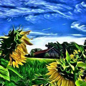 meadow sunflowers.jpg
