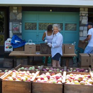 Grandma Grading Apples.jpg