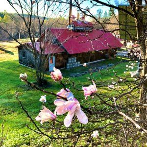 spring sugar house.jpg