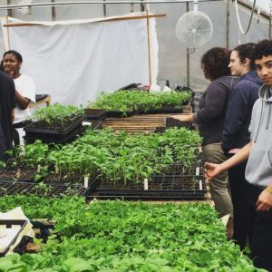NuestraComida-Greenhouse-Students-1024x768-panorama.jpg