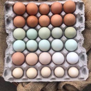 thomas eggs.jpg