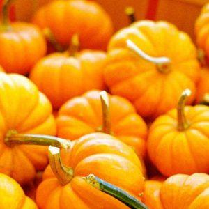 fletcher pumpkins.jpg