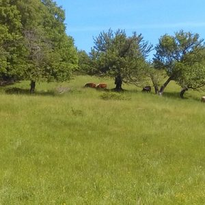 green+pastures.jpg