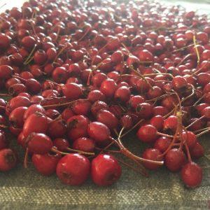 hawthorn berries resize.jpg