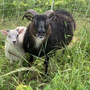 Constance&Lamb_sm.jpeg