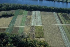 Aerial view of the Great Meadow, Hadley (Pete Westover photo)