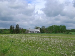 Echodale Farm, Easthampton (Marty Klein photo)