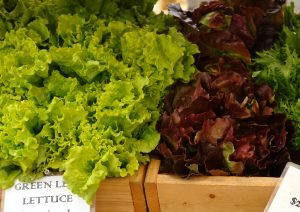 lettuce.kitchengarden
