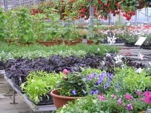 Dickinson.greenhouse.plants